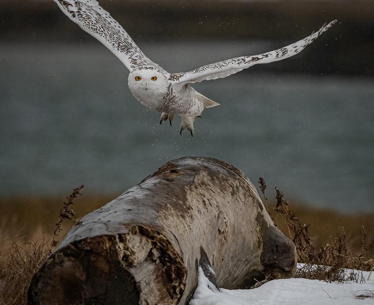 Thumper Log takeoff