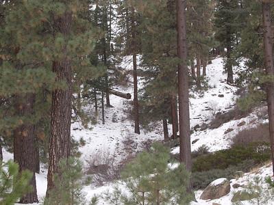 Snow Trip - Viaje a la Nieve 2004