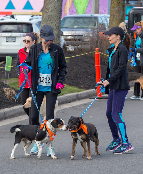 Richmond Spca Dog Jog 2018-634.jpg