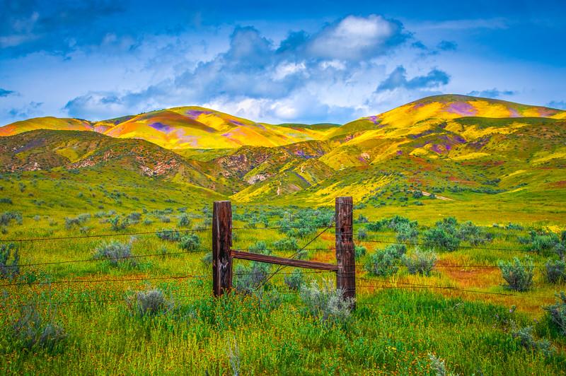 Carrizo Plain National Monument Wildflowers Superbloom Spring Symphony 18!  Elliot McGucken Fine Art Landscape Nature Photography Prints & Luxury Wall Art