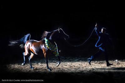 Las Vegas Photos for Arabhorse