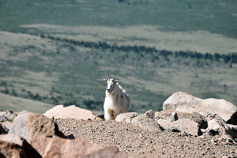 Mount Evans, Colorado, near the 14,265 ft summit, June 30, 2017.