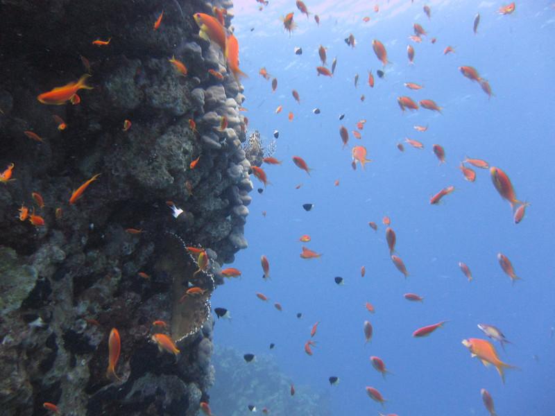 Sharm July_052.JPG