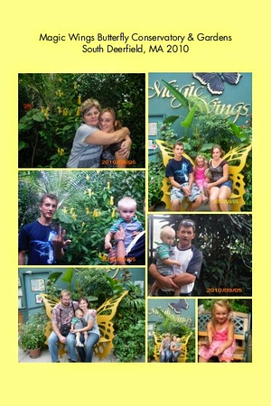 MA, South Deerfield - Butterfly Conservatory, Magic Wings