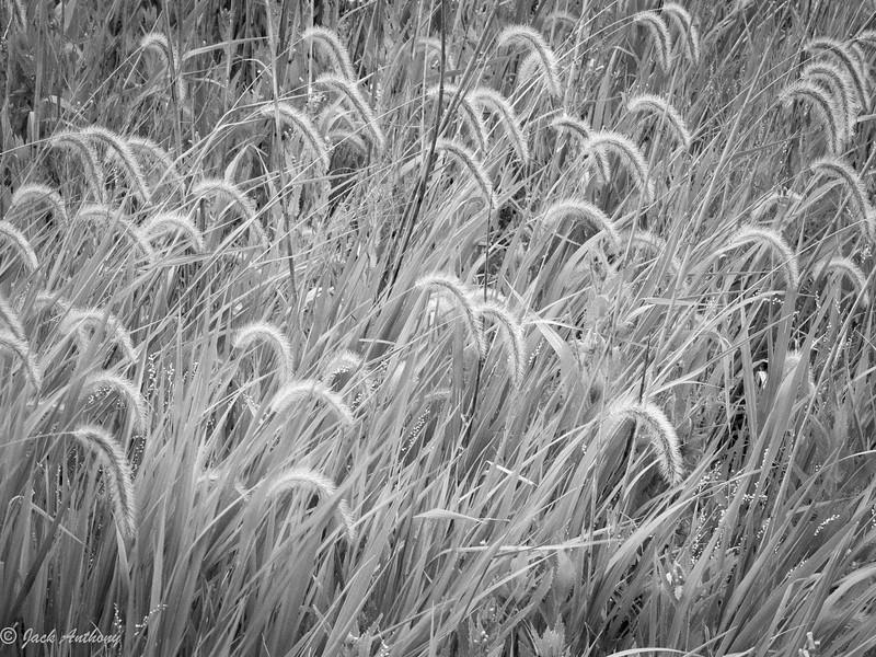 Lewes, DE Marshes