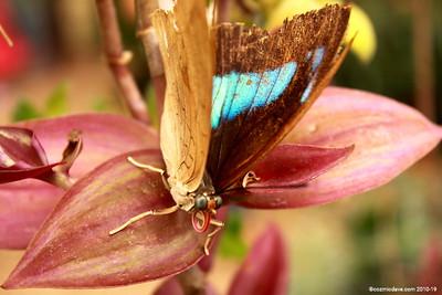Butterflies & Moths. Set 1