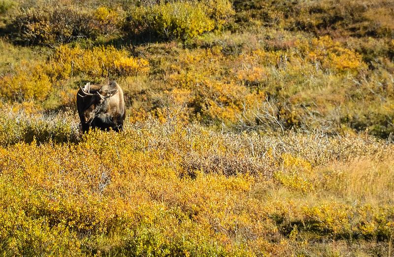Denali-National-Park-154.jpg