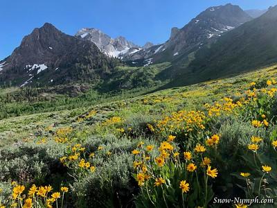 2019-06-25  McGee Creek Wildflowers