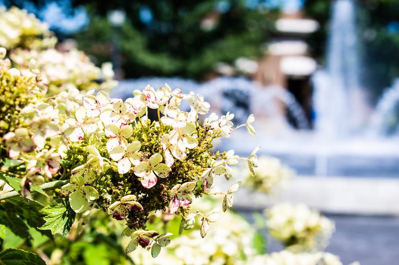 07_02_2019_Campus_Flowers_DSC_0146.jpg