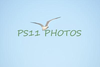 Birds of Lake Livingston