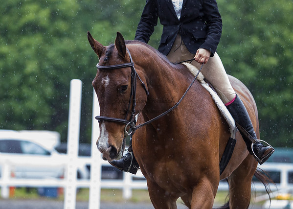 Equestrian - SVEA Hunter/Jumper - Squamish, May 2016