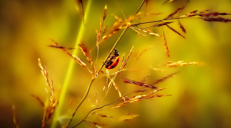 Bugs by Ray Bilcliff - www.trueportraits.com