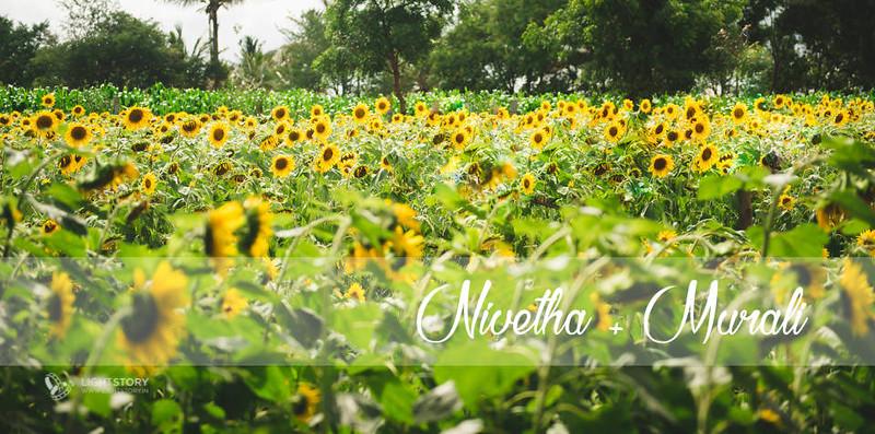 LightStory-CoupleShoot-Hassan-Bangalore-Hoysaleswara-Halebidu-Sunflowers-020.jpg