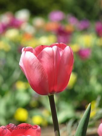 Duke Gardens 040613
