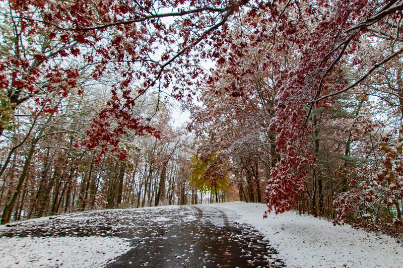 Snow-Wingfoot-Park-treecolor.jpg
