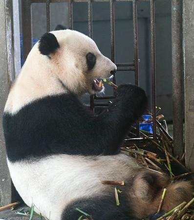 Chengdu China 2014