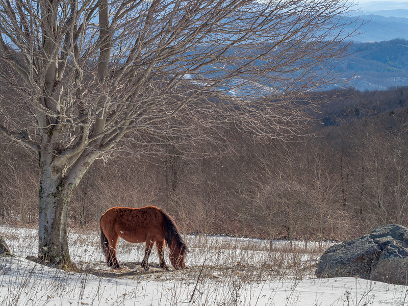 22 Mar 1 pony at Grayson (1 of 1).jpg