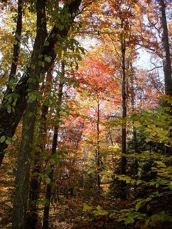 Natural Bridge Alabama Nov 2008