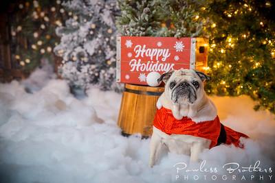 Pattie McNeilly Christmas Mini 2019