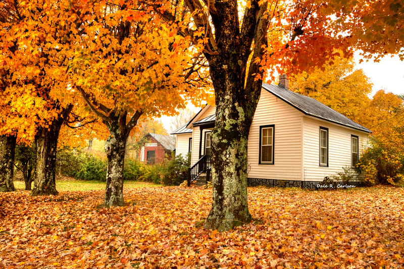 Virginia Creeper Autumn