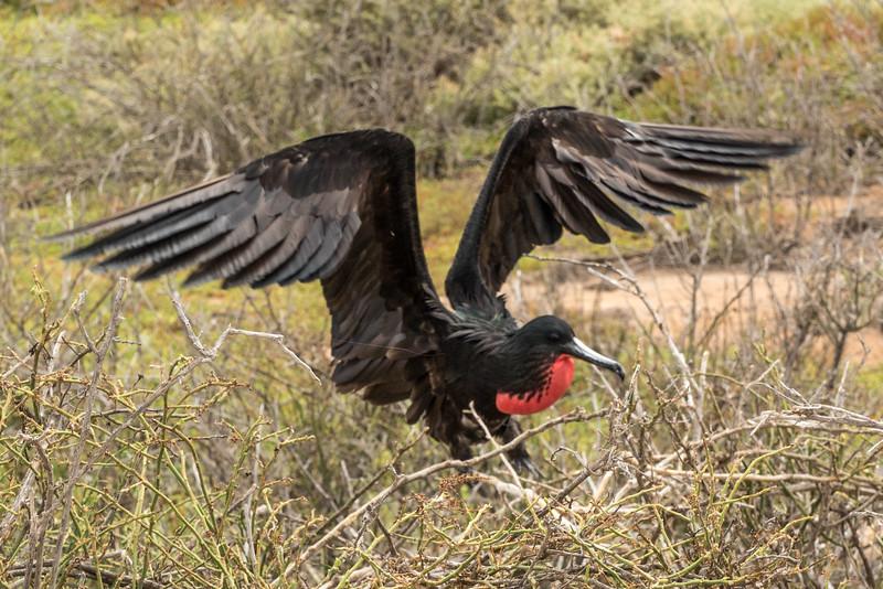 Galapagos-Best-027.jpg