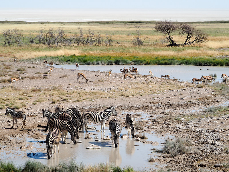 Animals at watering holes in Etosha National Park