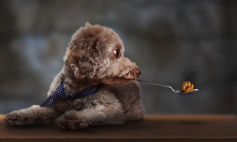 Gordon-dog-8.jpg