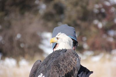 Shepaug Eagle Viewing