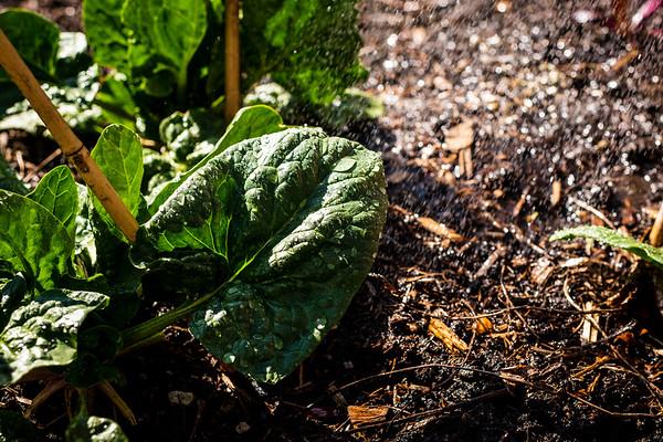 Kimberly - Sustainable Gardening