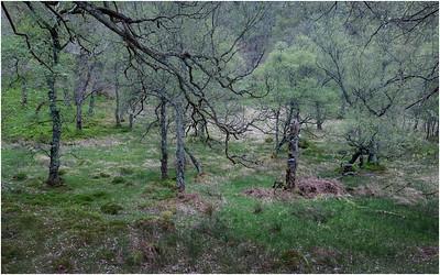 Scotland Foliage