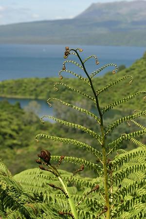 Lakes and Ferns near Rotovegas