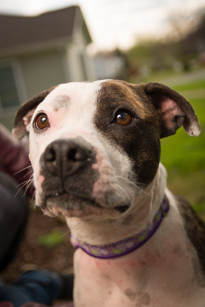 Sarah's Dog-26.jpg