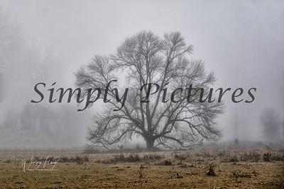 fog 0380