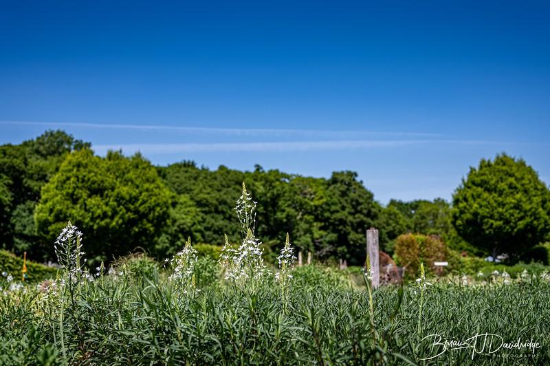 Sussex Prairie Gardens Z6-3720.jpg