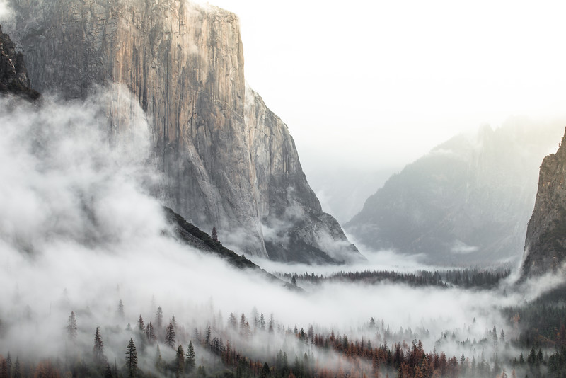 Foggy Yosemite Morning, California