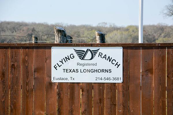 2020-02-16 Flying D Ranch Longhorns