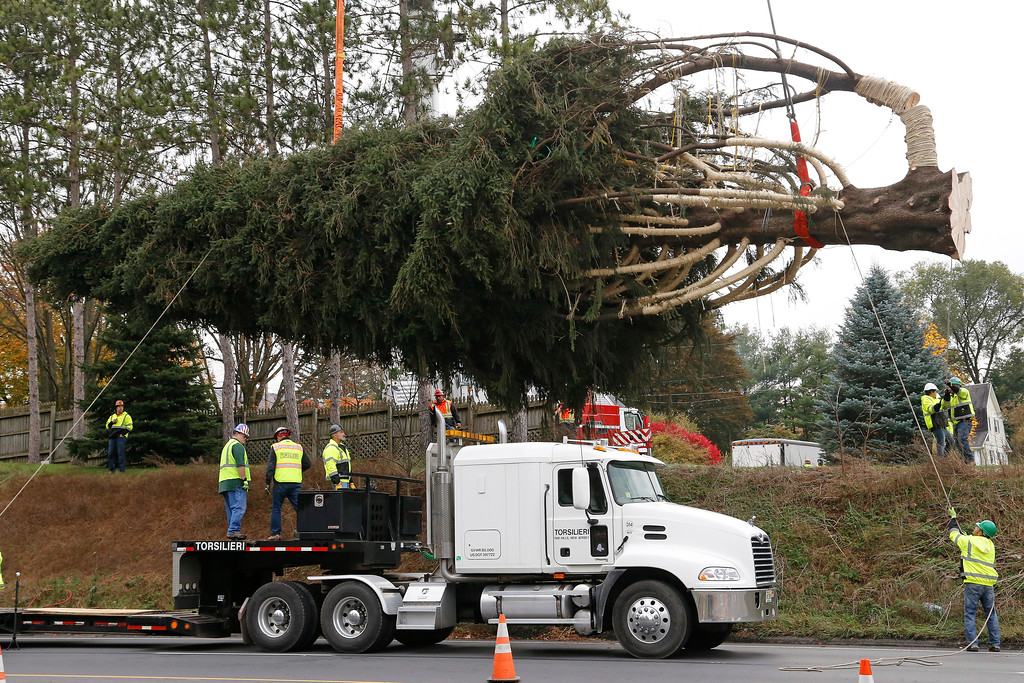 . This year\'s Rockefeller Center Christmas tree, a 75-foot tall, 50-foot in diameter Norway Spruce, weighing more than 12 tons, is loaded onto a flatbed truck after being cut from the yard of Jason Perrin in State College, Pa., Thursday, Nov. 9, 2017. The tree will be driven to Rockefeller Plaza in New York City, and put in place on Saturday, Nov. 11, from 8 a.m to 11a.m. in front of 30 Rockefeller Plaza. (AP Photo/Gene J. Puskar)