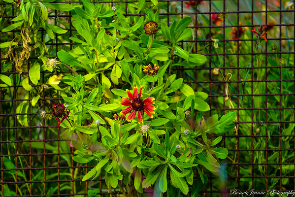 Flowers - Feb 2020