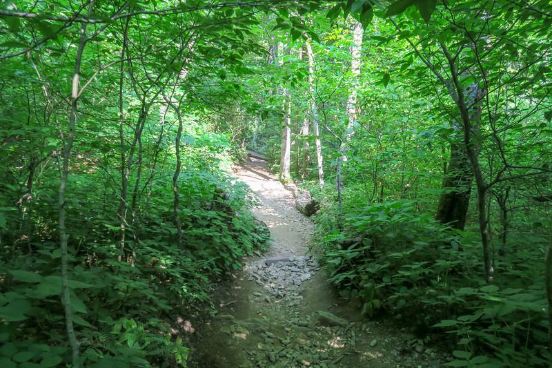 Mountains-to-Sea Trail -- 4,380'