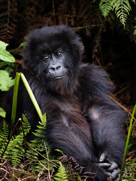 RichardTerborg_RwandaAnimals50.jpg