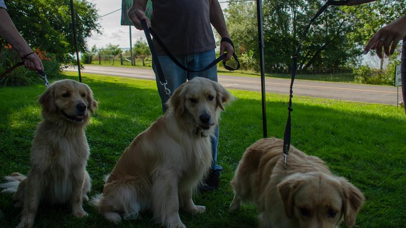 PuppyParty18-594.jpg