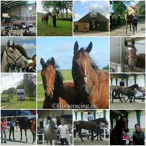 130919 Scandinavian Yearling Sale