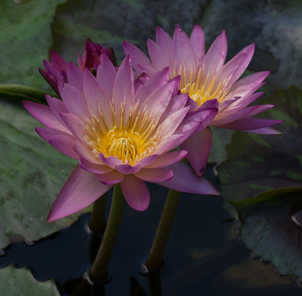 Nelson-Water-Garden-5869.jpg