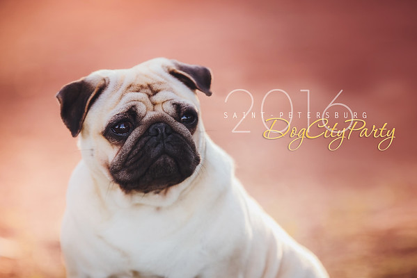 DogCityParty 17.07.2016