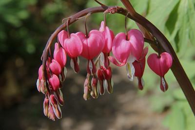 Spring Flowers - 2012