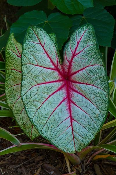 naples_botanical_garden_0036-LR.jpg