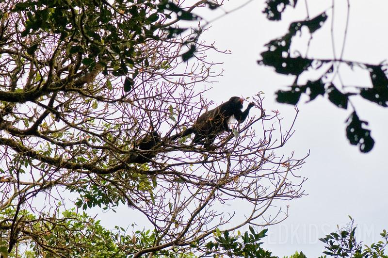 2009_01_Costa_Rica_189
