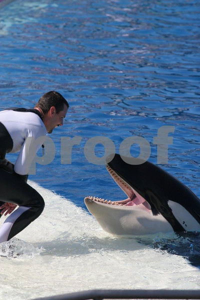 Trainier with orca whale at Sea World in San Diego, CA.