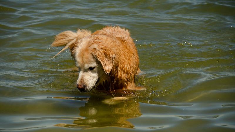 PuppyParty18-168.jpg