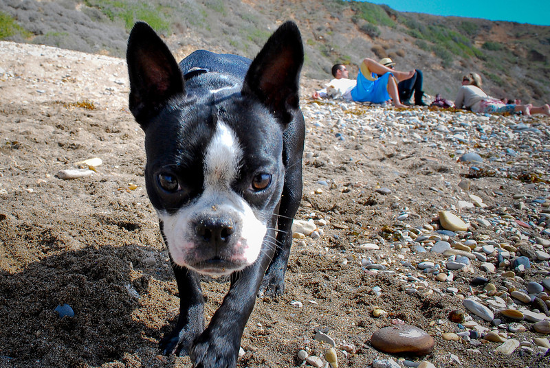 dogs_beach-103.jpg